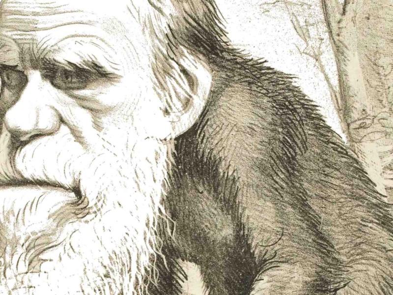 Darwin ha sempre ragione. Ecco cosa dice la famosa teoria dello scienziato inglese riguardo il mondo del bagno e perché ti può salvare anche se credi che non ti riguarda